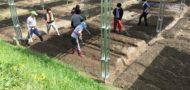 市民農園でソーラーシェアリング