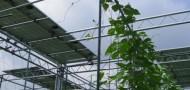 ソーラーシェアリング2